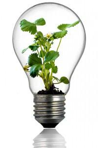 bulb-216975_960_720